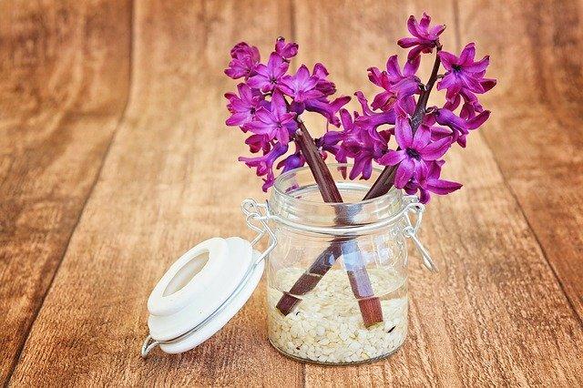 hyacinty v dóze