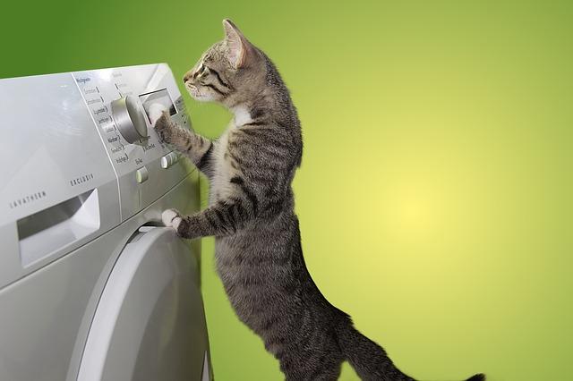 kočka a pračka