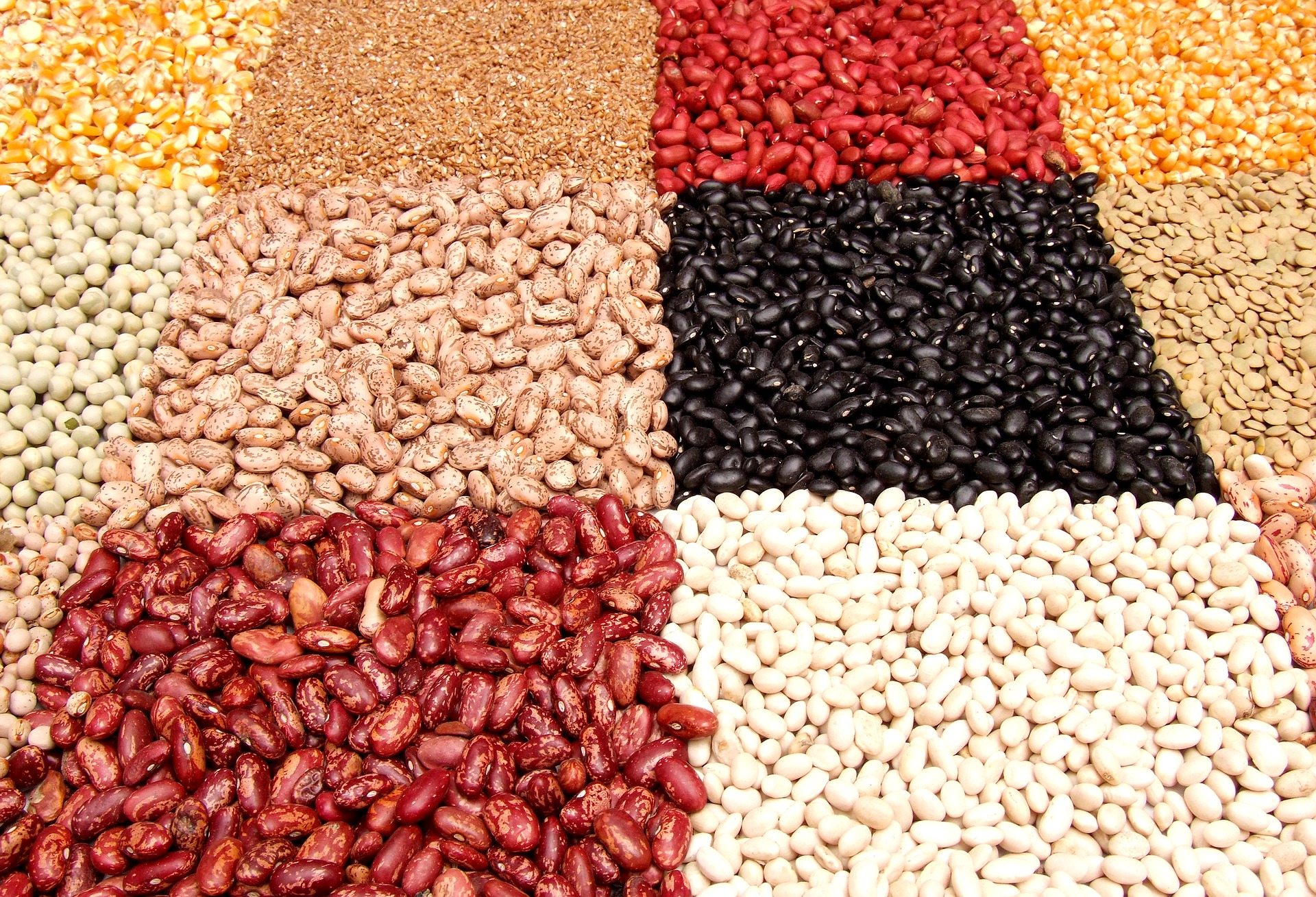 fazole mnoha druhů